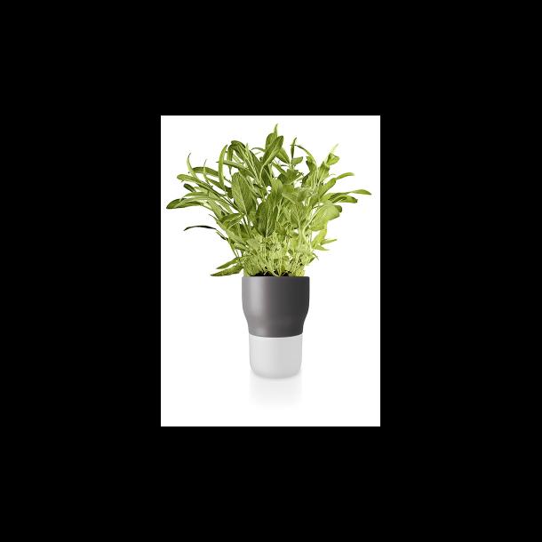 Eva Solo Watering herb pot - Nordic gray 11 cm